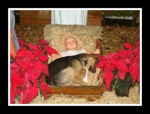 Dog in a manger edit